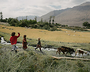 Three young girls (Bibi Hawa, 8, in red, Anor Gul, 6 and Gul Shira, 7) are watching over calves and walking to the village.<br /> The traditional life of the Wakhi people, in the Wakhan corridor, amongst the Pamir mountains.