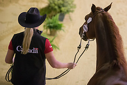 Lisa Coulter, (CAN), A Smokin Whiz - Horse Inspection Reining  - Alltech FEI World Equestrian Games™ 2014 - Normandy, France.<br /> © Hippo Foto Team - Dirk Caremans<br /> 25/06/14