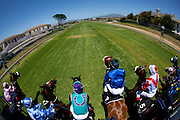 A race begins as horses bolt from the start gate at Kenilworth race track, Cape Town. Image by Greg Beadle