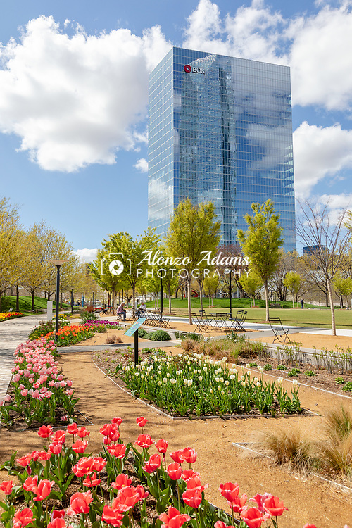 The Devon Tower is reflected in the BOK Plaza Tower with Myriad Gardens flowers in the foreground on April 4, 2019. Photo copyright © 2019 Alonzo J. Adams.