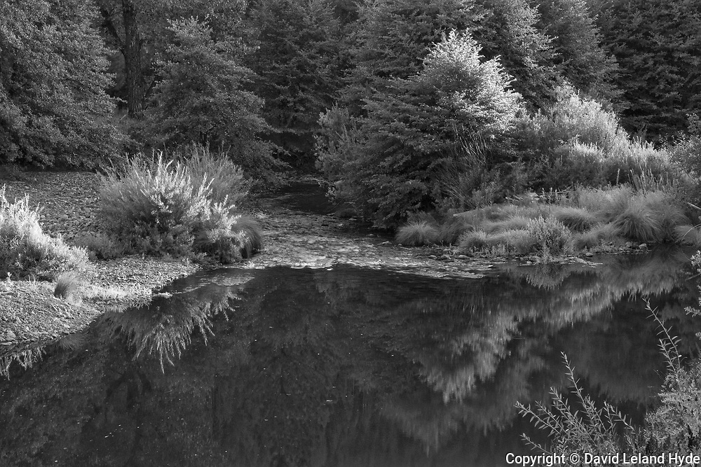 Riffle Below Little Grizzly Creek, Indian Creek, Genesee Valley, California Mountains, Alders, Willows, Fir Forest, Black and White Art, Sierra Nevada Mountains, Black and White Photography