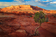 Juniper tree and rock formations in the North Coyote Buttes unit of the Vermillion Cliffs National Monument