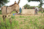A donkey stands by while girls get water from a UNICEF-sponsored, pedal-activated pump in the village of Game, Guera province, Chad on Tuesday October 16, 2012.