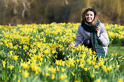 © Licensed to London News Pictures. 07/02/2020. London, UK. GRETA RESOTKAITE sitting with the Daffodils as they start to bloom in St James's Park. Photo credit: Dinendra Haria/LNP