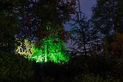 Illumination of a tree in Hestercombe Gardens. Part of the Illumina Project by Ulf Pedersen.