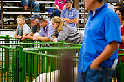 21 JULY 2020 - COLFAX, IOWA: Spectators watch swine judging at the Jasper County Fair in Colfax, about 30 miles east of Des Moines. Summer is county fair season in Iowa. Most of Iowa's 99 counties host their county fairs before the Iowa State Fair. In 2020, because of the COVID-19 (Coronavirus) pandemic, many county fairs were cancelled, or scaled back to concentrate on 4H livestock judging. The Iowa State Fair was cancelled completely. The Jasper County Fair cancelled most events and focused on just the 4H contests. Tuesday were the swine contests.            PHOTO BY JACK KURTZ