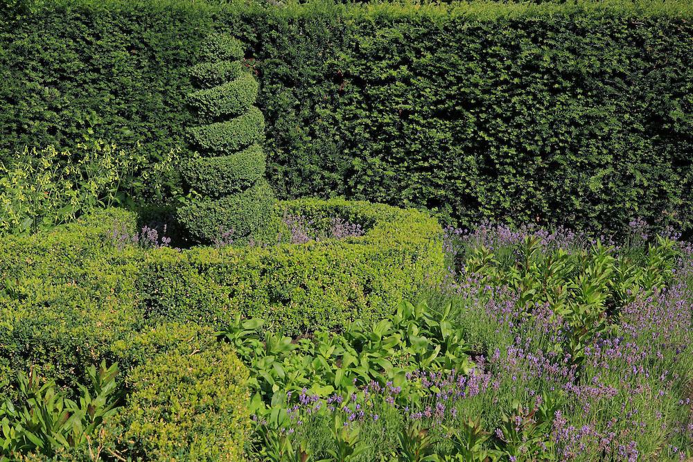 Manicured Hedges Regents Park - London, UK