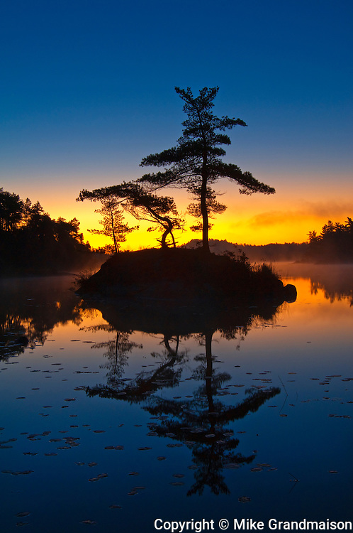 White pine trees on island in McGregor Bay (Georgian Bay) at dawn<br /> Whitefish Falls<br /> Ontario<br /> Canada