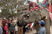 A small crowd of local people gather as a mahout (handler) removes a banknote from the trunk of his Asian elephant during the procession of 67 elephants around the town of Sayaboury during the Sayaboury Elephant Festival, Sayaboury province, Lao PDR. Originally created by ElefantAsia in 2007, the 3-day elephant festival takes place in February in the province of Sayaboury with over 80,000 local and international people coming together to experience the grand procession of decorated elephants. It is now organised by the provincial government of Sayaboury.The Elephant Festival is designed to draw the public's attention to the condition of the endangered elephant, whilst acknowledging and celebrating the ancestral tradition of elephant domestication and the way of life chosen by the mahout.