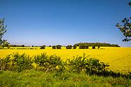 05-05-2018 - Golf in Cornwall 2018. Mooie gele koolzaadvelden op de route van Dover naar Cornwall