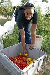 United States, Washington, Seattle, teenage girl harvesting tomatoes; participant in Seattle Youth Garden works