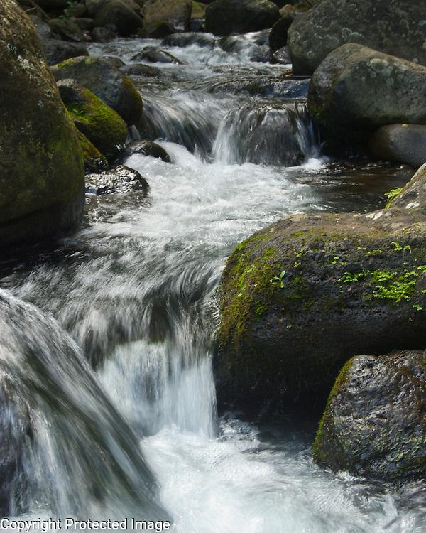 This lovely creek runs through a botanical garden on the north coast of Kauai.