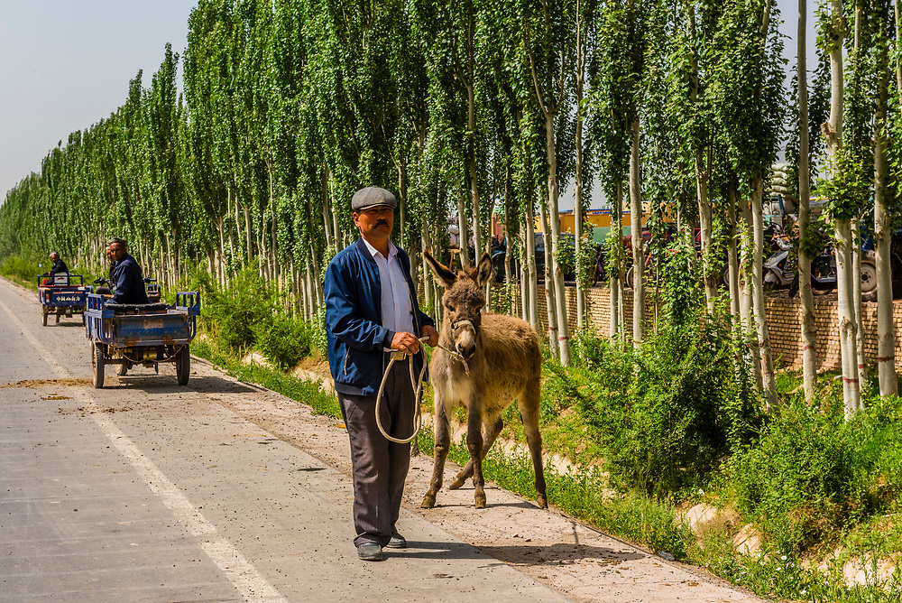 The Sunday Livestock market just outside Kashgar (China's westernmost city), Xinjiang Province, China. Kashgar is along the Silk Road, near Tajikistan and Pakistan.