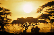 Sunset Amboseli National Park, Kenya