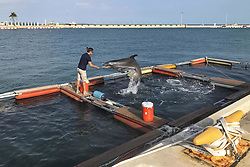 Apr 26, 2017 - Key West, Florida, U.S. - Marine Maneuvers. A trainer with the U.S. Navy Marine Mammal Program works with Constellation, an Atlantic bottlenose dolphin, during training in Truman Harbor at Naval Air Station Key West, Fla., April 26, 2017. The program is in Key West to maintain the mobility of its expeditionary Marine Mammal System to detect and mark the location of mine-like objects on the ocean bottom. Navy photo by Trice Denny. (Credit Image: ? Trice Denny/Navy/DoD via ZUMA Wire/ZUMAPRESS.com)