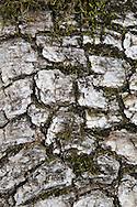 Moss growing on fallen tree bark, Henry Coe State Park, California