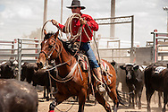 Will James Roundup, Ranch Rodeo, Yearling Doctoring, Pat Heminger, Hardin, Montana.