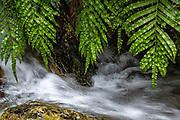 Dewy spider web on ferns over stream. The Routeburn Track in Fiordland National Park, near Te Anau, Southland region, South Island of New Zealand. In 1990, UNESCO honored Te Wahipounamu - South West New Zealand as a World Heritage Area.