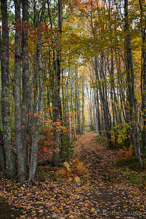 Lost in the woods? Deep breaths, slow down, close eyes, pray for a way out that fulfills the highest good. Open eyes, look around, see the tree cathedral leading to the light.