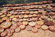 Cactus plants display The Beth Chatto garden and nursery, Elmstead Market, Essex, England
