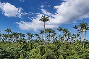 Royal Palm Reserve, Westmoreland Parish, Jamaica