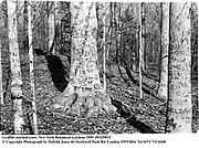 Graffiti marked trees.New York Botanical Gardens1993.f93259f15<br />© Copyright Photograph by Dafydd Jones<br />66 Stockwell Park Rd. London SW9 0DA<br />Tel 0171 733 0108