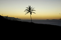16 JAN 2006, CAMPANAS DE CIMA/FOGO/CAPE VERDE:<br /> Silhouette einer Palme im Sonnenuntergang, Insel Fogo, Kapverdische Inseln<br /> Silhouette Palm, Island Fogo, Cape verde islands<br /> IMAGE: 20060110-01-028<br /> KEYWORDS: Travel, Reise, Natur, nature, cabo verde, Dritte Welt, Third World, Kapverden