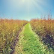 Prairie path at Retzer Nature Center in Waukesha, WI.