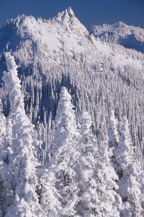 View toward Steeple Rock from Hurricane Ridge, winter, Olympic National Park, Washington, USA