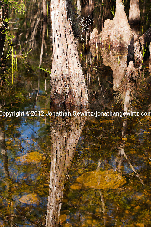 WATERMARKS WILL NOT APPEAR ON PRINTS OR LICENSED IMAGES.