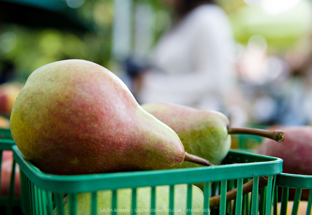 Fresh, local organic pears biodynamically grown by Laura Sabourin's Feast of Fields and on sale at Toronto's Dufferin Grove organic farmers market.