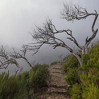 On the trek you will see a lot of dead burned trees. In august 2016, fires raged across Madeira, killing three women. Later the authorities arrested a suspect person. A 24 old man was sentenced to 14 years for setting the forest fire.