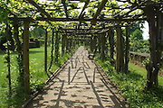 An intriguing graphic pattern of shadows cast on the ground by the pergola timbers and the emerging foliage of the grape vine which they support.<br /> <br /> This extensive pergola forms a square walk in the formal West Gardens at Hatfield House. The strategically-placed seats face the house.<br /> <br /> The extensive gardens at Hatfield House were begun by Robert Cecil (and his plant-hunter John Tradescant) in the early 17th century. The gardens were significantly restored and expanded in Victorian times.<br /> <br /> Date taken: 31 May 2013.