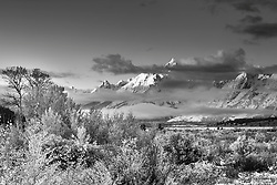 A greyscale autumn at Willow Flats in Grand Teton National Park.
