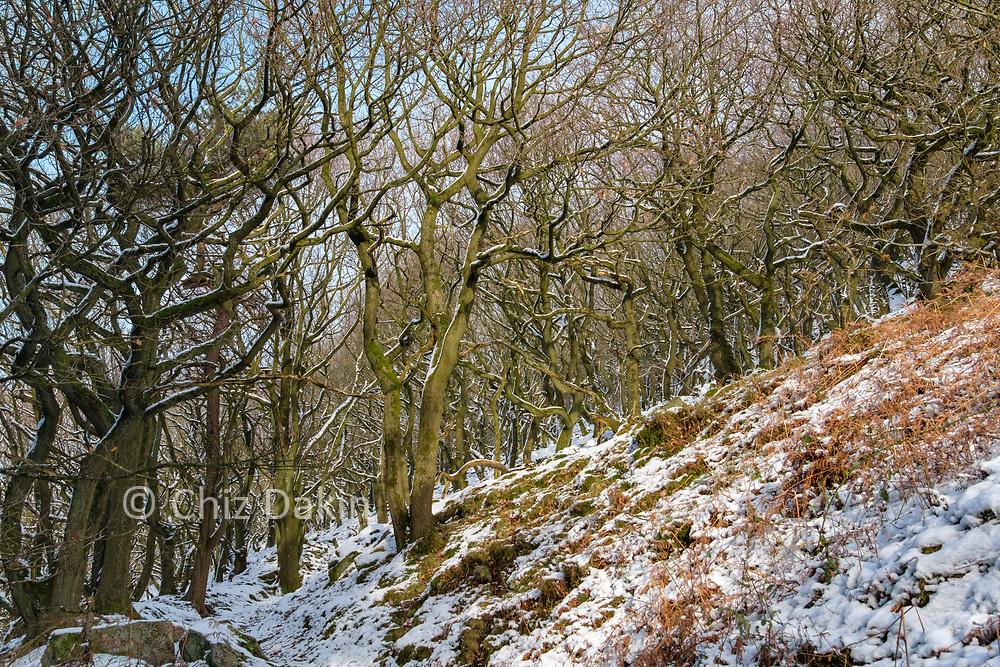 The ancient woodland holloway leading up to Bamford Edge