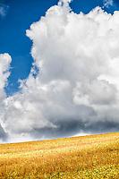 Plantação de soja no Assentamento da Fronteira. Dionísio Cerqueira, Santa Catarina, Brasil. / <br /> Soybean plantation. Dionísio Cerqueira, Santa Catarina, Brazil.