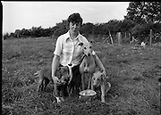 Greyhound and Pups.    (M81)..1979..12.07.1979..07.12.1979..12th July 1979..Pictured at Saggart, Co Dublin,was a champion greyhound and her pups. The dogs were reared using Spratts Dog Foods..Image shows the handler and her greyhound with two of her pups.