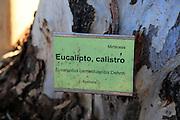 Eucalyptus tree Latin sign, botanical gardens at Rodalquilar, Cabo de Gata natural park, Almeria, Spain