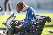 A pigeon flies next to a young man seating on a bench outside Belfast city hall on Sunday, April 25, 2021. (Photo/ Vudi Xhymshiti)