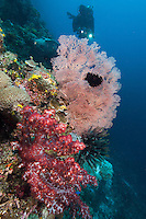 Dive on Reef Wall..Shot In Indonesia