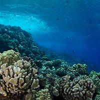 Coral Reef, Molokini Crater, Maui Hawaii