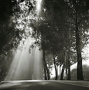 Light shines through trees alongside a country road on the island of Rugen, northern Germany
