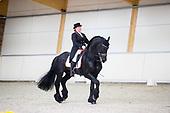 European Championships Friesian Horses