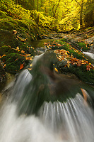 Autumn foliage along the upper reaches of the White River, Green Mtn National Forest, Granville, Vermont