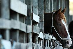 Cavalo na estrebaria durante o 12 Rodeio Internacional do Mercosul, um dos maiores eventos do gênero. FOTO: Jefferson Bernardes/Preview.com