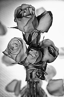 A study of roses in black and white