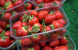 "File photo dated 01/10/13 of punnets of strawberries, as the price of strawberries and other British summer fruit will ""soar"" if Brexit negotiations fail to allow for seasonal labourers from Europe to cultivate and harvest the crops, according to a report."