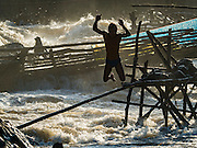18 JUNE 2016 - DON KHONE, CHAMPASAK, LAOS:  A fisherman jumps into the Mekong River after clearing his fish traps at Khon Pa Soi Waterfalls, on the east side of Don Khon. It's the smaller of the two waterfalls in Don Khon. Fishermen have constructed an elaborate system of rope bridges over the falls they use to get to the fish traps they set. Fishermen in the area are contending with lower yields and smaller fish, threatening their way of life. The Mekong River is one of the most biodiverse and productive rivers on Earth. It is a global hotspot for freshwater fishes: over 1,000 species have been recorded there, second only to the Amazon. The Mekong River is also the most productive inland fishery in the world. The total harvest of fish from the Mekong is approximately 2.5 million metric tons per year. By some estimates the harvest in the Tonle Sap (in Cambodia) had doubled from 1940 to 1995, but the number of people fishing the in the lake has quadrupled, so the harvest per person is cut in half. There is evidence of over fishing in the Mekong - populations of large fish have shrunk and fishermen are bringing in smaller and smaller fish.        PHOTO BY JACK KURTZ