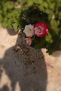Anastasia's psychogram I<br /> <br /> 58th Kifissia Flower Show<br /> <br /> 13/05/2012