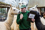 Zoo Keeper Darren Jordan counts 5 Llama and 3 Alpaca. The ZSL London Zoo Annual Stocktake 2015. Responsible for the care of more than 750 different species, keepers face the formidable task of noting every mammal, bird, reptile, fish and invertebrate at the Zoo.